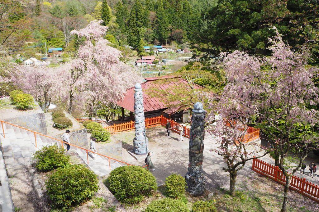 金櫻神社 境内の桜